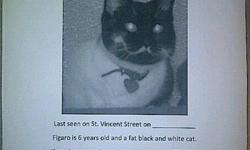 Figaro was lost last week on St. Vincent Avenue, near Algoma St. She is a very loving cat that is declawed and spayed. She means rhe world to us. She got out of an open window and is not an out door cat at all. I would love to find her, please help.