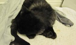 Black cat (I think it might be a kitten) that looks to be injured. I went to the Vet and they checked for a microchip and it does have one. It's been roaming around Tenth Line for the last month but now is injured so I took him in but I can't keep him, so