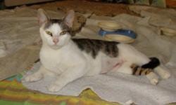 Maya is just one of six extremely affectionate cats who were found dumped at a camp site off a remote hiking trail. We have no idea why anyone would abandon Maya or any of the other lovely cats, especially in such a callous location. Maya is an