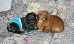 I am looking for a kind and dog loving home for my male and female miniature dachshund. I have had Walter and Louise for 3 years and this will be very hard to see them go. I am hoping to find a home were both of my dogs can go. Its very important that