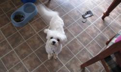 Hi I have a male maltese for sale. He was a year on September 28. Looking for  a forever home for him....cicumstances have changed and I cannot keep him. If you are interested in him please call 252-6374. Please do not respond to this email as I put it on