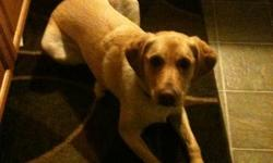 I have to give up my wonderful, friendly, obedient yellow lab (Doug). He's a great family pet with no bad habits but due to shift work I'm no longer able to give him the attention he needs. He loves long walks, hikes, swimming, and playing fetch! I will