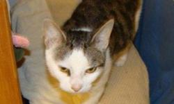 Maya is one of six (yes! 6!!) extremely friendly and affectionate cats found dumped at a camp site off a remote hiking trail. We have no idea why anyone would abandon Maya or any of the other lovely cats, especially in such a callous location. This