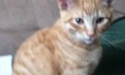 Orange cat about 1year old went missing on Gordon street by exmouth Saturday night he could be anywhere with in the Gordon ,Felix, or collingwood area PLEaSE KEEP AN EYE OUT FOR an ORANGE CAT!! Named Norris he's a smart and loving cat. And usually comes