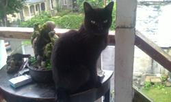 missing from kent street north simcoe on, My pure black cat is missing, hes very friendly and will literally walk in your house if you open the door, he's 10-11 years of age, no collar, loves being outside, please email or call 226-440-2591 Lisa, havent