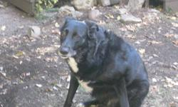 Maddix is a 5 year old dog who must go to a caring and loving family... We are very sad that we have to let him go to a new home but its the best decision for him... He loves other dogs... He is not the greatest around young children.. he is very timmed