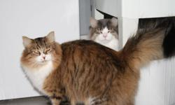 I am moving and need to rehome my 2 cats. They are brothers and are approximately 1 1/2 years old. Both have been neutered. They are indoor cats and are quite loveable. Good with children and dogs. If interested please call and leave a message. Thanks.
