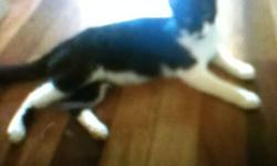 Black and white male cat. Looking for a good home. Provided with love and care. This ad was posted with the Kijiji Classifieds app.