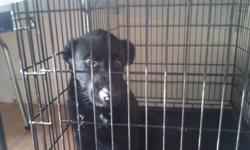Bear is a greyhound irish wolfhound cross. He is a male. I would love to keep him but I am moving to an apartment and I can't have dogs there he is house train and also kennel train. He comes when he is called. He asks to go outside if u have him in the