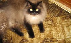 This loving cat was born April 02 2009..He has been fixed and declawed.We are moving and sadly he can not come with us..His name is Hydranoid.  He is a indoor cat has never been outside.It does not show in the pictures but his eyes are a baby blue.asking
