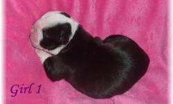 Quality and Healthy Registered Olde English Bulldog Puppies looking for forever homes. We have Males and Females available. . $400 Deposit is required to hold the puppy of your choice. All the puppies are thick, bully, and full of wrinkles! Puppies are