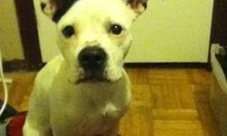 mr dogerson is almost a year old and has been returned to me  unfortunatly for petey; his owner was caught up in some other non dog related drama he is a lil under weight and has sufferd from an un occupied brain but is eager to to learn and please hes an