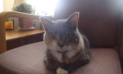 I am trying to find a new home for my cat.  She's a 4 year old, really cute, loving cat.  She is litter trained, spayed and has all her vaccinations up to date.  She is a great house cat and loves to cuddle up or play with her owner(s). I have been a