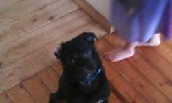 We have a pug cross for sale she loves other dogs and cats and is great with kids.we cant give him all the attention he needs and deserves he is a sweet little puppy and loves attention This ad was posted with the Kijiji Classifieds app.