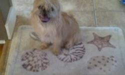 I am a almost 7month old Pug / Shi tzu mix I am a girl and I am a great puppy.. good with babies, teens ,female and males!   I have all my shots from the vet and I am looking for a new home...   My family loves me and they thought they had time for me but