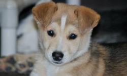 We have several adorable puppies for adoption through our rescue. They range in ages 8 weeks to 7 months, they are all mix breeds, some have Lab, some have Husky, etc Some of their pictures can be seen here but they all can be seen on our web site at