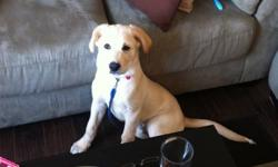 Age: 5 months                                                                    price: $200.00                      phone: (204) 386 2815                        Owner: Martha                           He is a loving puppy. Likes to play especially with