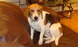 Looking for a good, energetic family, probably best suits a country home for 4 1/2 year old pure breed Beagle. he needs alot of attention and is good with kids and other dogs. Unfortunately we are very busy and he deserves more. We will be screening