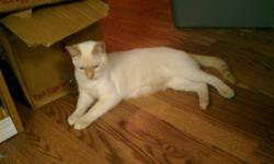 This lovely juvenile boy is looking for his forever home! I apologize for the low quality cell phone pictures!! My camera is on the fritz. He is currently located in PG but I am moving to Kelowna the end of November and can deliver to Kelowna for free. He
