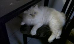 hi i have a male cat, i love him soo much but, i just cant afford to get him fixed, he is a very loving cat he loves to cuddle,and rub up against your leg all the time. he loves to have a face rub,<3 i have a nice little box to go wit the cat and some