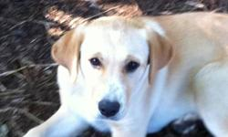 Max is a 6 month old pup. His mother is a golden retriever and I'm not sure what the father is. He's not fixed and has not had alot of time being trained. He has been outside most of the time. he is a very cute pup who loves attention. He's still young so
