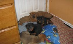 i have four cute lilttle girls and one boy rottie /sharpies  need of a good home  will come with all there shoot mother and father very good and loyaly dogs
