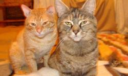 These abandoned cats named Sam and Leah are thought to be brother (orange tabby) and sister (brown tabby/tortie). The vet believes they are about two years old. Sam is very confident and will greet any new humans with love and affection, crawling into