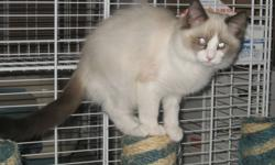 Meet Jack. He is 4 months old and is the last of 6 kittens to find his forever home. He is the softest kitten and purrs and purrs and purrs.   Jack was born Sept 23, 2011. He has had his first two sets of vaccinations, been dewormed, neutered and micro