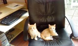 Very upset , I have to sell all my babies, I have one dog and four cats , two is femail , two is male , the femail ones is yellow colour and the birth date is March 19,2011, the two male ones is beautiful white with a little long hair, the birth date is