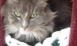 Breed: Domestic Long Hair   Age: Senior   Sex: F   Size: M Primary Color: Grey Tabby Secondary Color: White Age: 10yrs 8mths 4wks Animal has been Spayed   View this pet on Petfinder.com Contact: BC SPCA Cowichan & District Branch | Duncan, BC
