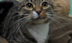 Breed: Tabby   Age: Senior   Sex: F   Size: M Mama is a quiet, clean cat who is looking for the purrfect home to live out the rest of her life. She may be seven, but that doesn't mean she's some old lady! Mama is extremely affectionate and when enticed,