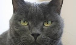 Breed: Domestic Short Hair   Age: Senior   Sex: M   Size: L Daffy wants everyone to know he's not as serious as he looks! He can be quiet goofy, playful and adventurous for an old man. Daffy is also extremly socialable and loves to have company. He plays