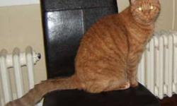 Breed: Domestic Short Hair-orange   Age: Senior   Sex: M   Size: L THIS PET IS POSTED FOR A PRIVATE OWNER! Please contact Alayne directly at 875-2189, 488-2189, or akapl3@hotmail.com. LOCATED IN THE TOWN OF SHELBURNE. Rusty is an affectionate, indoor
