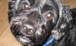 Breed: Cockapoo   Age: Senior   Sex: M   Size: S Blackie is a senior cockapoo that came into our rescue in very bad shape. He has had the vet care he needs and is now looking for his forever home! He currently weighs 23 lbs. He is a very active fun loving