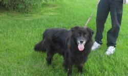 Breed: Collie   Age: Senior   Sex: M   Size: M Brick is a sweet older fellow who came into rescue following a series of unfortunate events. He was left in the care of friends temporarily when his owners moved away and they didn't come back for him. He