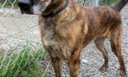 Breed: Shepherd   Age: Senior   Sex: M   Size: L Damien: 8 year old Shepherd mix, male (Damien was a bit camera shy - better pic coming soon!) I am a sweet, older guy who is very friendly with people. I love to be petted, and I am well trained in basic