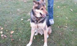 Breed: Shepherd   Age: Senior   Sex: M   Size: L Dublin is a truly wonderful dog with a very friendly and sweet demeanor. He originally came into rescue last summer and has made his way back through no fault of his own. Dublin's new owners have fallen