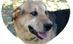 Breed: German Shepherd Dog   Age: Senior   Sex: M   Size: L My name is Riggs and I am a large Shepherd boy. I am about seven years old but I do not act it. Boy oh boy can I boogie. To find out more about me please read my friend Magnum's sad story. I