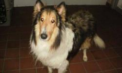 Breed: Collie   Age: Senior   Sex: M   Size: L Sept 27th: Jake is brand new to rescue and we're getting to know him a little better. Right now we know he is approx. 9 years old and a very sweet, well-behaved boy. He has no known health issues but we will