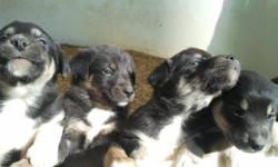 only 2 left! intelligent, good disposition