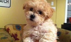 I have one shih poo puppy left. She just turned 8 weeks old. She is already going to the washroom outside and comes when called. I kept this one out of the litter because it was my intention to keep her as she was my favorite. However, I will now be