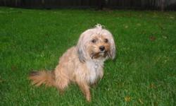Beautiful Male and Female Shorkie coming from and looking for a loving family. Both are cuddly and fun loving. The female was born July 11, 2010 and the male was born June 17, 2010. All vacinations are up to date. We have a new addition to the family and