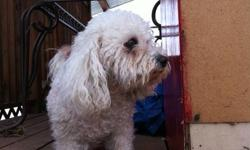 I have a loving six year old Bichon to good to a good home. Happy loving companion in need of a little more TLC. Her name is Duffy :)