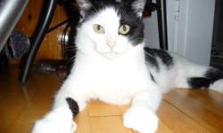 Here's Smiley, a lovely abandoned cat who was taken in from behind an apartment building in Dartmouth. He was lucky a young couple decided to come to his help - otherwise, this handsome and deserving cat would be facing the winter without regular food or