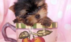 @@@ 647-838-6762 @@@ *** READY TO GO OCT 28th *** TEACUP AND TINY TOY YORKIES 3 FEMALES ONLY 1.3LBS-1.5LBS 2 MALES ONLY 1.4LBS-1.8LBS VET CHECKED, DE-WORMED, VACCINATED YORKIES ARE NON SHEDDING AND HYPOALLERGENIC, FULL BLACK AND TAN COATS. WILL MATURE TO