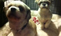 Looking for a loving home for our 2 shih tzus! We had found a home for them but she realized two was too much for her...and we can't split them up! We just don't have the time they need...great with kids...we have two...sleep in kennel at night and in