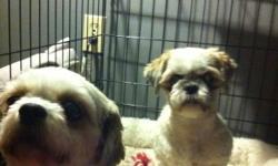 Looking for a loving home for our 2 shih tzus in the Dauphin area or can meet us in the Dauphin area on Sunday! We had found a home for them but she realized two was too much for her...and we can't split them up! We are passing through Dauphin on Sunday