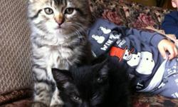 Two free kittens one all black shorter hair other longer hair tabby sweet kittens and they are completely litter trained! Message me if interested! This ad was posted with the Kijiji Classifieds app.