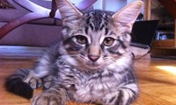 I have two kittens that I am giving away for free. Please call Yeama 416-312-8470
