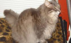 For Free: Two healthy indoor adult cats, male and female siblings, long-haired, 5 years old.  Both cats are healthy, sociable, gentle, safe with children and were fixed as kittens.  These cats have Maine Coon features. Reason for re-homing : my wife and I